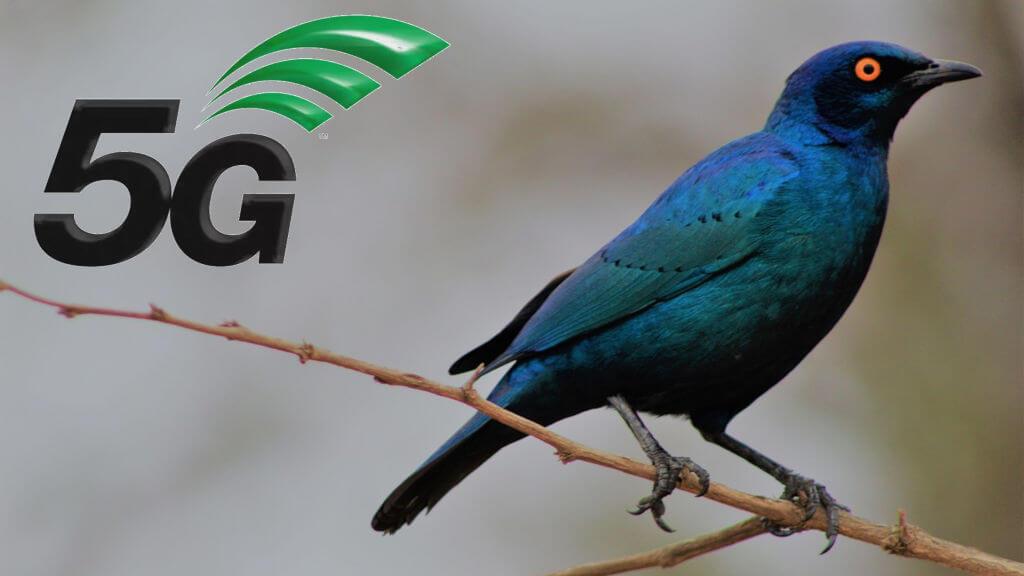 5G ptaki